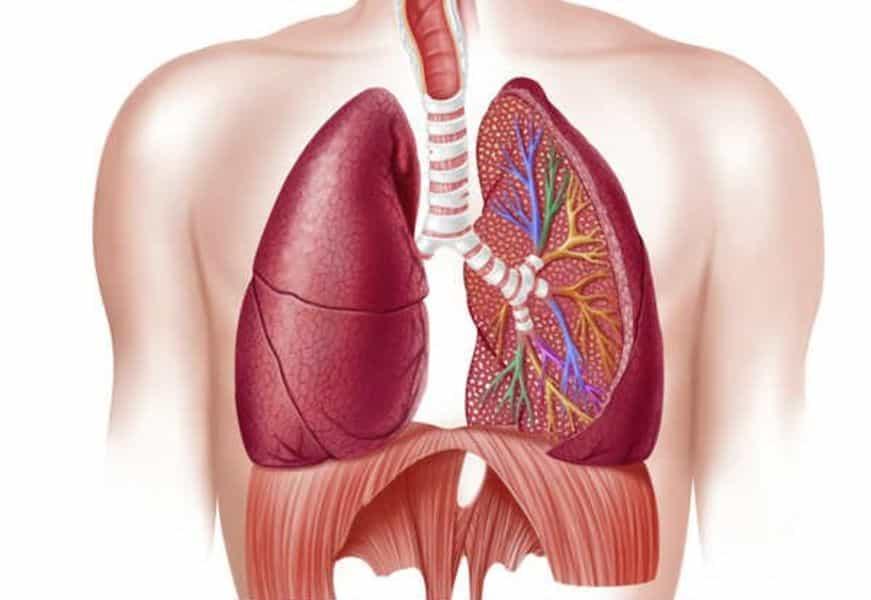 DPOC - Doença Pulmonar Obstrutiva Crónica image