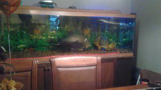 fish 1`