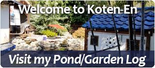 Pond and Garden Log