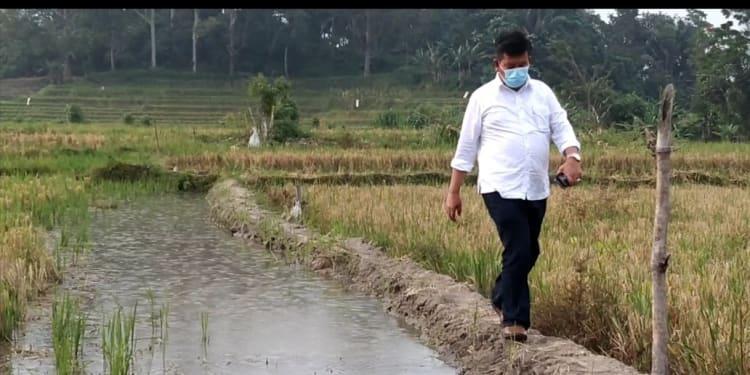Bupati Kabupaten Simalungun, Radiapoh Hasiholan Sinaga (RHS) saar Berjalan di Pematang Sawah