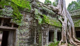Avalon Waterways Ta Prohm Temple Siem Reap Cambodia