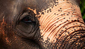 Azamara Club Cruises Elephants in Colombo Sri Lanka