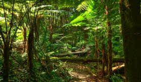 Azamara Club Cruises - Rainforest Ferns