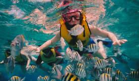 Caribbean Snorkel - Holland America