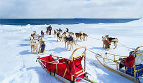 Carnival Cruise Lines dog sled discovery in Juneau Alaska