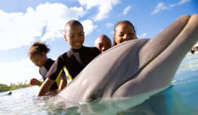 Swimming with Dolphins - Carnival Cruise Lines