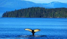 Celebrity Cruises Whale in Alaska