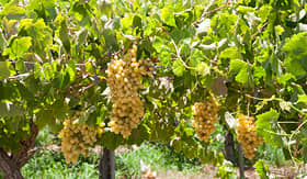 Celebrity Cruises vineyard Elqui Valley Chile