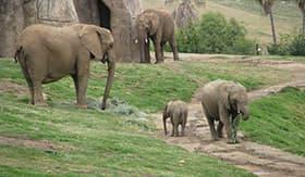 San Diego Zoo in California