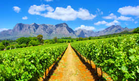 Crystal Cruises vineyard in South Africa