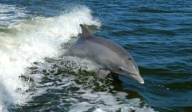 Dolphin in Walvis Bay - Cunard Line
