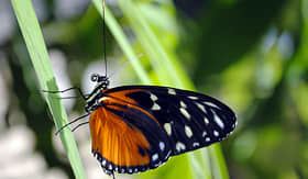 Eastern Caribbean Butterfly Farm