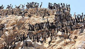 Holland America Line Ballestas Islands seabirds coast of Peru pacific