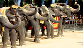 Holland America Line elephant show in Thailand
