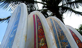 Holland America Line group of surfboards under a palm tree