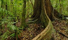 Holland America Line tropical rainforest Chagres National Park Panama Central America