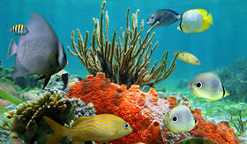 Holland America Line underwater colors of life in a coral reef Caribbean sea