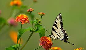 Butterfly Farm in St. Maarten