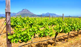 MSC Cruises - Vineyards of South Africa