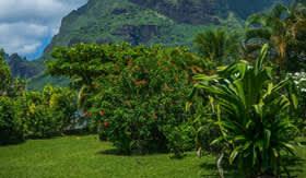 Lush terrain in French Polynesia