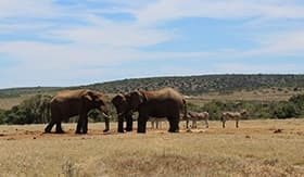 Safari in Port Elizabeth