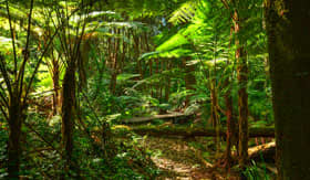Rainforest in Australia