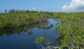 Norwegian Cruise Line - Lucaya National Park in Bahamas
