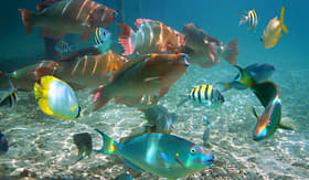 Norwegian Cruise Line shoal of colorful tropical fish in the caribbean sea Belize