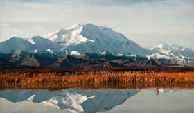 Mt. McKinley towering over Denali