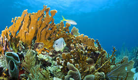 Oceania Cruises coral reefs off the coast of Roatan Honduras