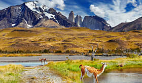 Oceania Cruises Guanaco in Torres del Paine national park Patagonia Chile