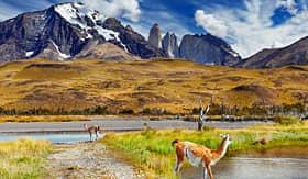 Oceania Cruises Guanaco in Torres del Paine national park Patagonia Chile