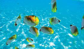 Paul Gauguin beautiful vibrant school of fish