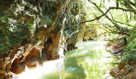 Princess Cruises stream outside the Waitomo Glowworm Caves