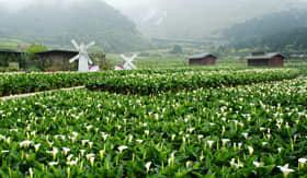 Princess Cruises Calla Lily in Yangmingshan National Park