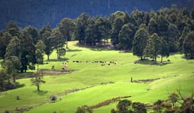 Princess Cruises farmland south of Hobart