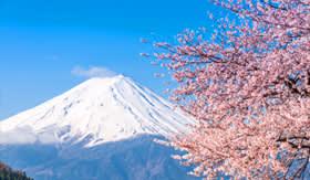 Princess Cruises Mt Fuji and cherry blossom at Lake Kawaguchiko