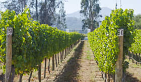 Princess Cruises Vineyard in Chile