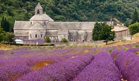 Regent Seven Seas Cruises Abbaye de Senanque in Provence, France