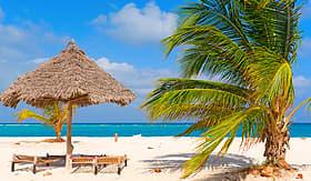 Regent Seven Seas Cruises palm at the shore of Indian Ocean Kendwa Beach Zanzibar Tanzania