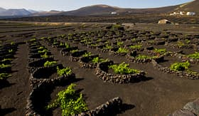 Regent Seven Seas Cruises winery in Lanzarote, Spain