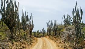 Royal Caribbean - Bonaire Desert