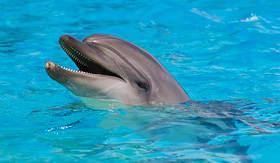 Royal Caribbean - Dolphin in Bahamas