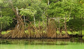 Royal Caribbean mangrove trees Samana Dominican Republic