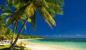 Royal Caribbean palm trees and a white sandy beach at Fiji Islands