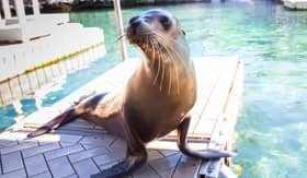 Sea Lion in the Bahamas - Royal Caribbean
