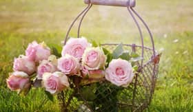 Basket of fresh roses