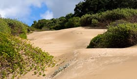 Silversea Cruises East London South Africa dune landscape