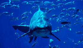 Silversea Cruises shark Ushaka Durban South Africa