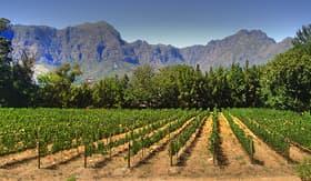 Silversea Cruises vineyard in Franschhoek Cape Town